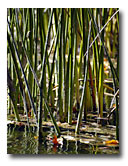 Reeds grow along the side of the river.