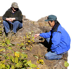 Sidney Smith and Marty Yamagiwa examine young aspens sprouting after the Blue Fire.