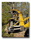A special machine saws off overpopulated juniper.